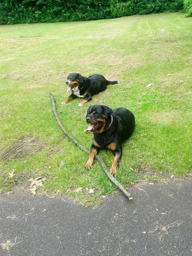 Freya Mit Rocky Dogs #mydog Dogs Of EyeEm Hundeshooting Hundefreundschaft EyeEm Dog Lover From My Point Of View heute wieder Hunderunde