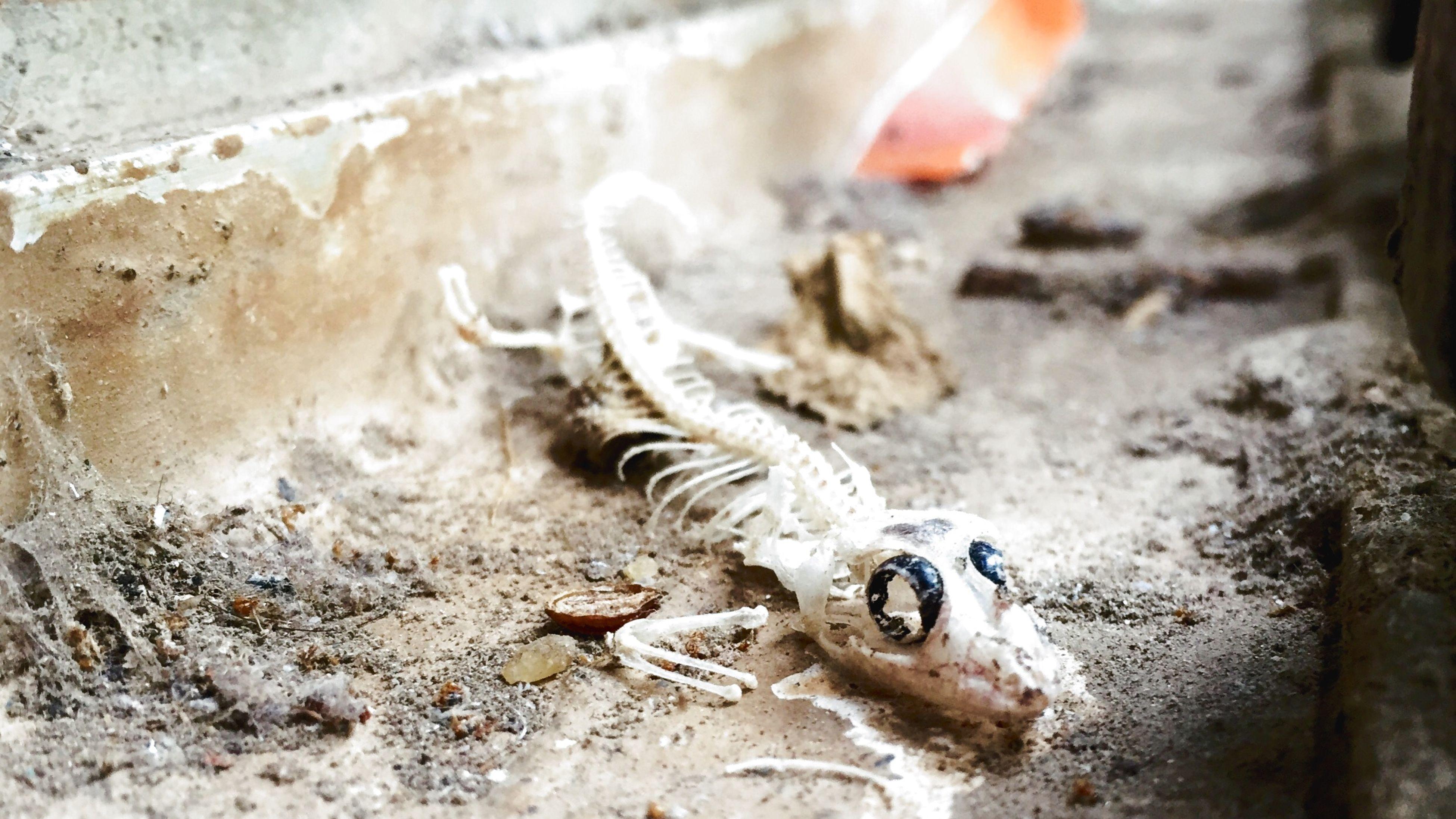 Fcuking Awsome! Output. Dead Lizard! Shot On IPhone 6 IShots PRShots
