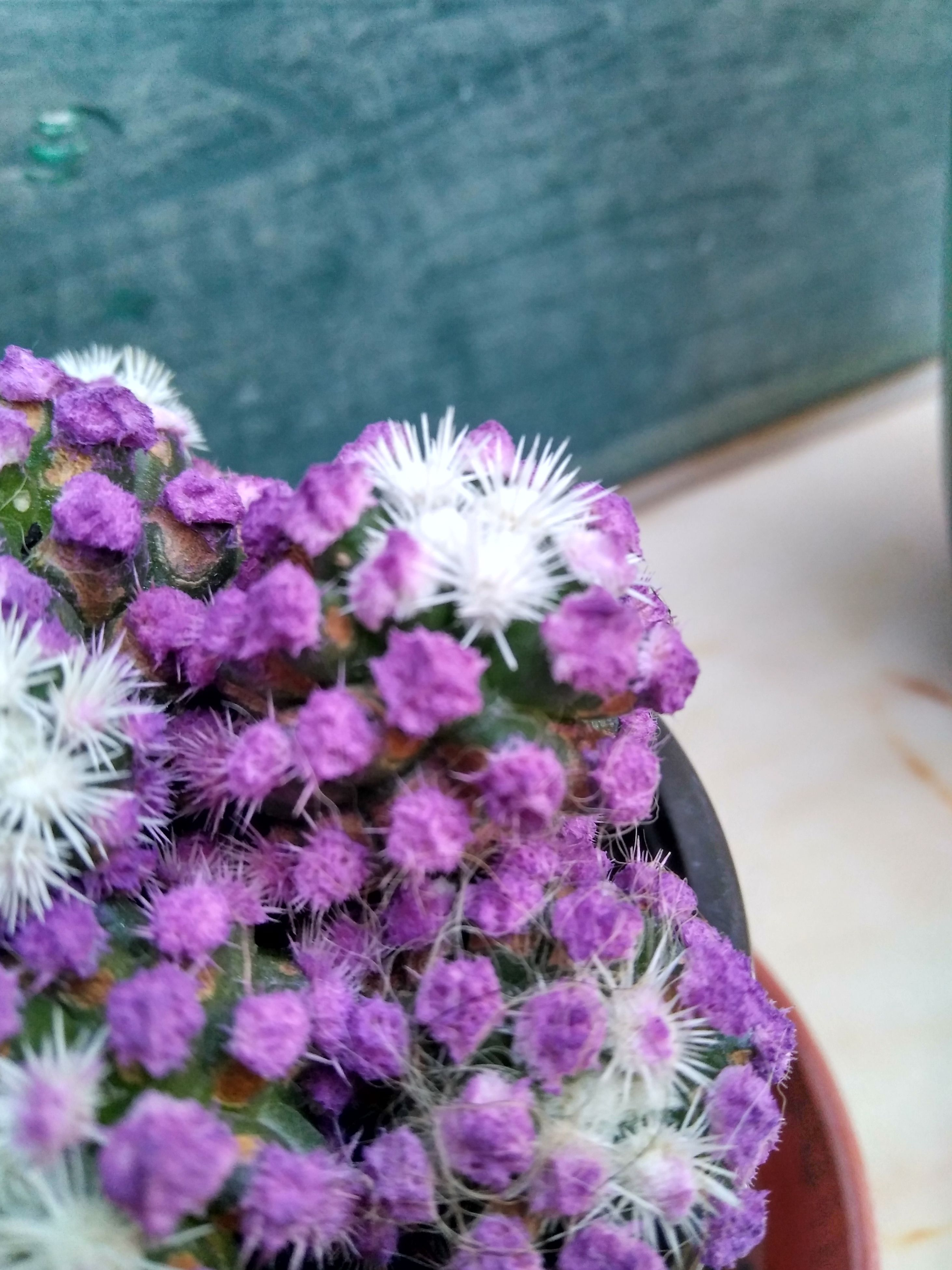 flower, purple, fragility, nature, growth, beauty in nature, petal, day, freshness, no people, plant, close-up, outdoors, flower head
