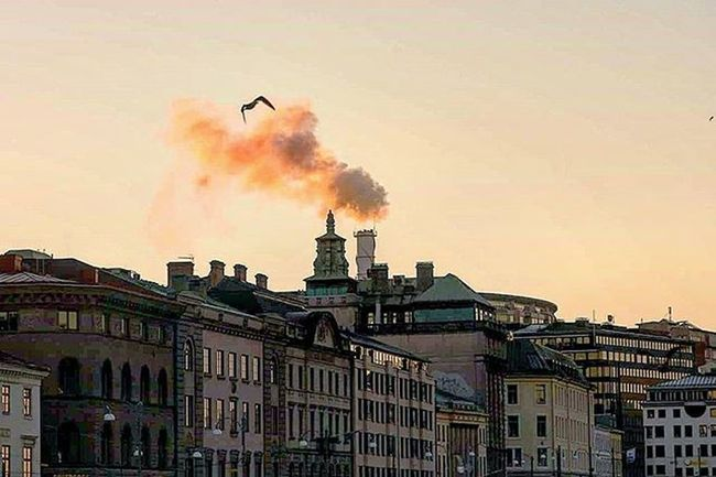📷♨ Gothenburg City Streetmobs Street Bulding Smokebomb Smoke Color Smokecolor Skyporn Magazine Streetlife Bird Lovley  Images Perfect Goteborg Sweden Pic Sweden Beautifulday Coldweather Photo Likes Tagsforlikes followme goteborgstad instagram @awesome_pixels @exaperture @swedenimages @raktgenomstan