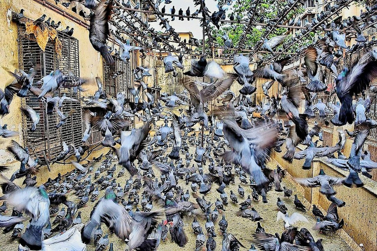 PIDGEON FLIGHT!!!! Follow me on instagram for more!! @epicrut Full Frame Backgrounds Pattern Day Close-up No People Outdoors Textured  Nature Pidgeonlife Clicktheepic EyeEm Selects Experienceindia India Travel Destinations Pidgeons In Flight Feeding Pigeons