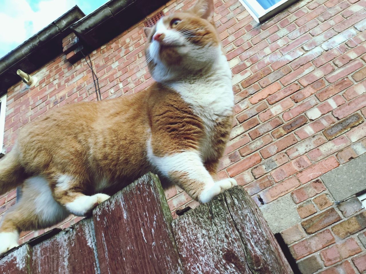 domestic cat, domestic animals, animal themes, pets, feline, one animal, mammal, cat, no people, day, outdoors