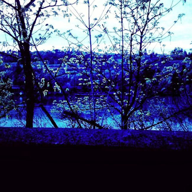 Another old, low quality one, but i want to see if this is ok as a cover photo (update: not so much--oh well). Oregon City Driving By View From The Car Out The Window  Wilamette River Trees Trees And Sky Blue Color Lake Oswego Across The River River Scenery Still Life Nature Outdoors Outside Branches Beauty Pacific Northwest  Portland Portland, OR Landscape Bodies Of Water Vibrant
