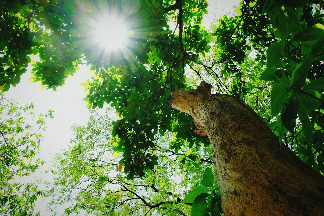 Sunlight Green Tree Nature Green Color Sunlight Outdoors Forest Beauty In Nature Sky Visual Feast