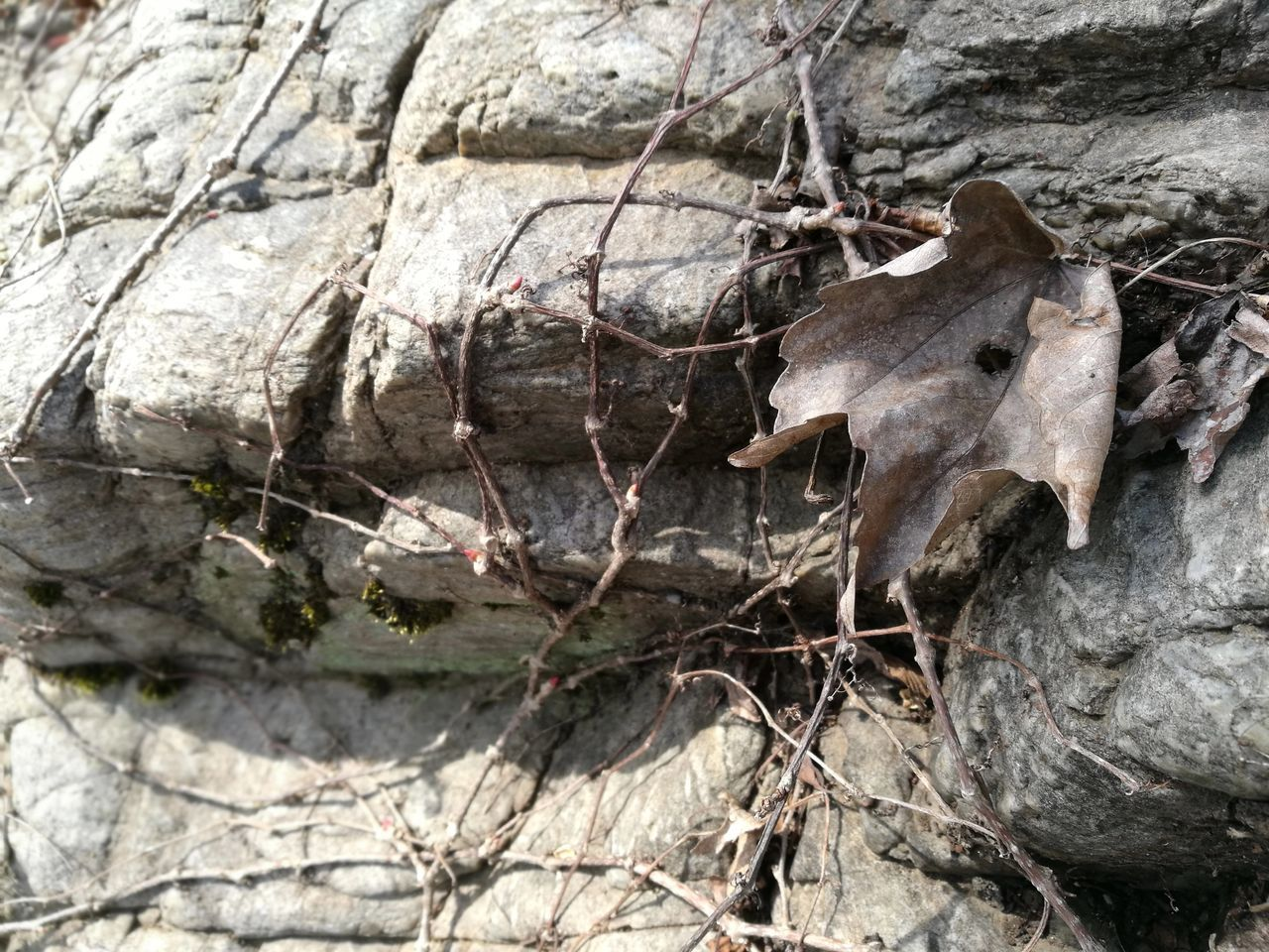 Close-up Nature No People Tree Outdoors Full Frame Textured  Day Stone Wabi-sabi