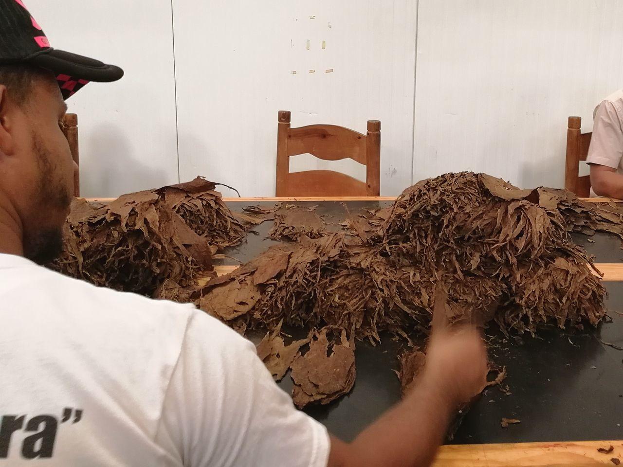Republica Dominicana Dominican Republic Tobacco Cigars Making, Cigars Factory, Cigars República Dominicana. Tobacco Leaf Handcraft
