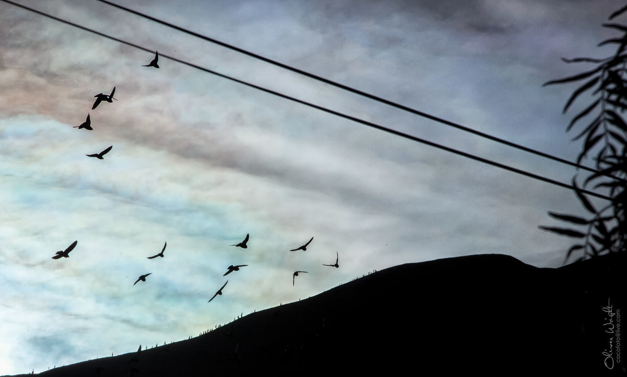 Bird Flying Flock Of Birds Silhouette Low Angle View Sky Cloud - Sky Outdoors Mid-air Nature Migrating Day No People Argentina Jujuy Bird Photography Beauty In Nature Landscapes Scenics Nature Tilcara