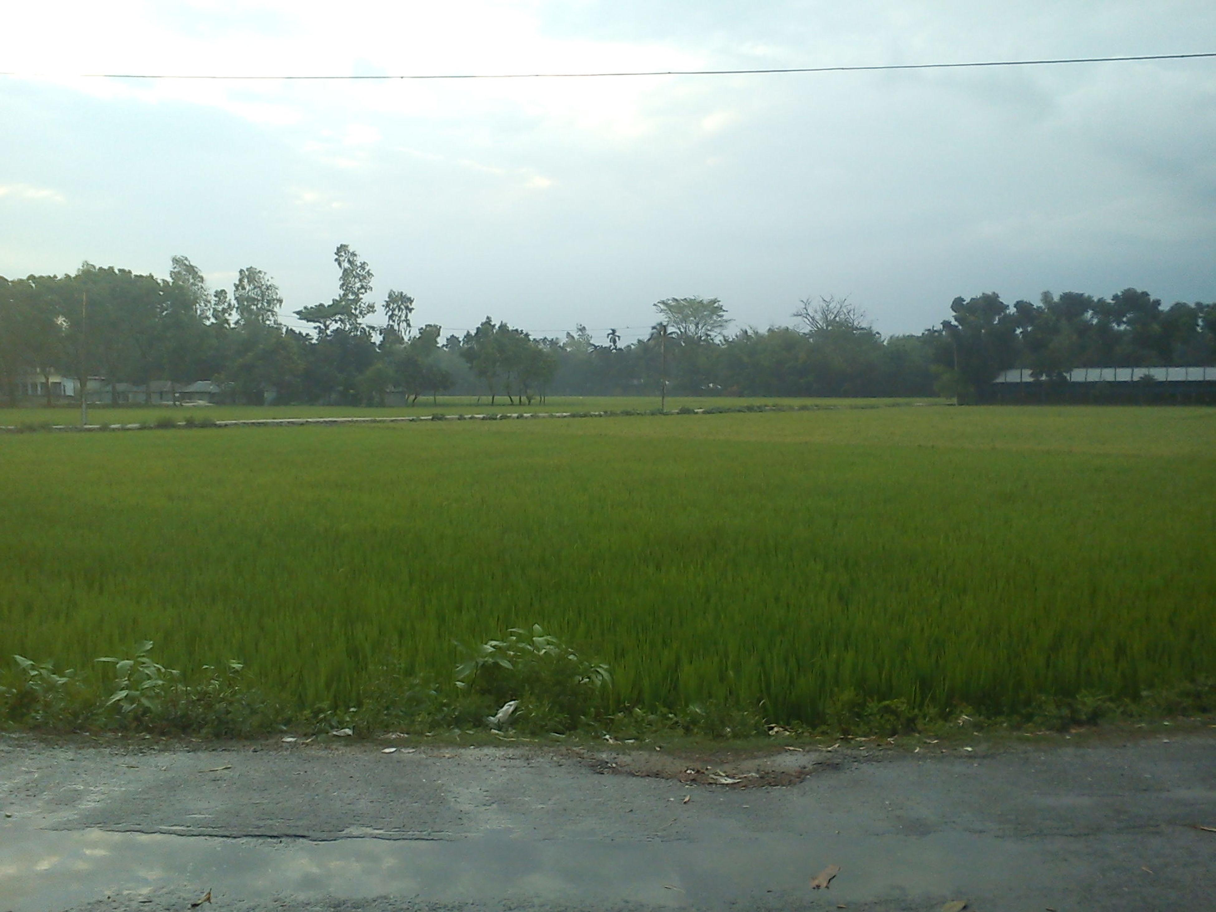 Sky Green Horizon Paddy Field