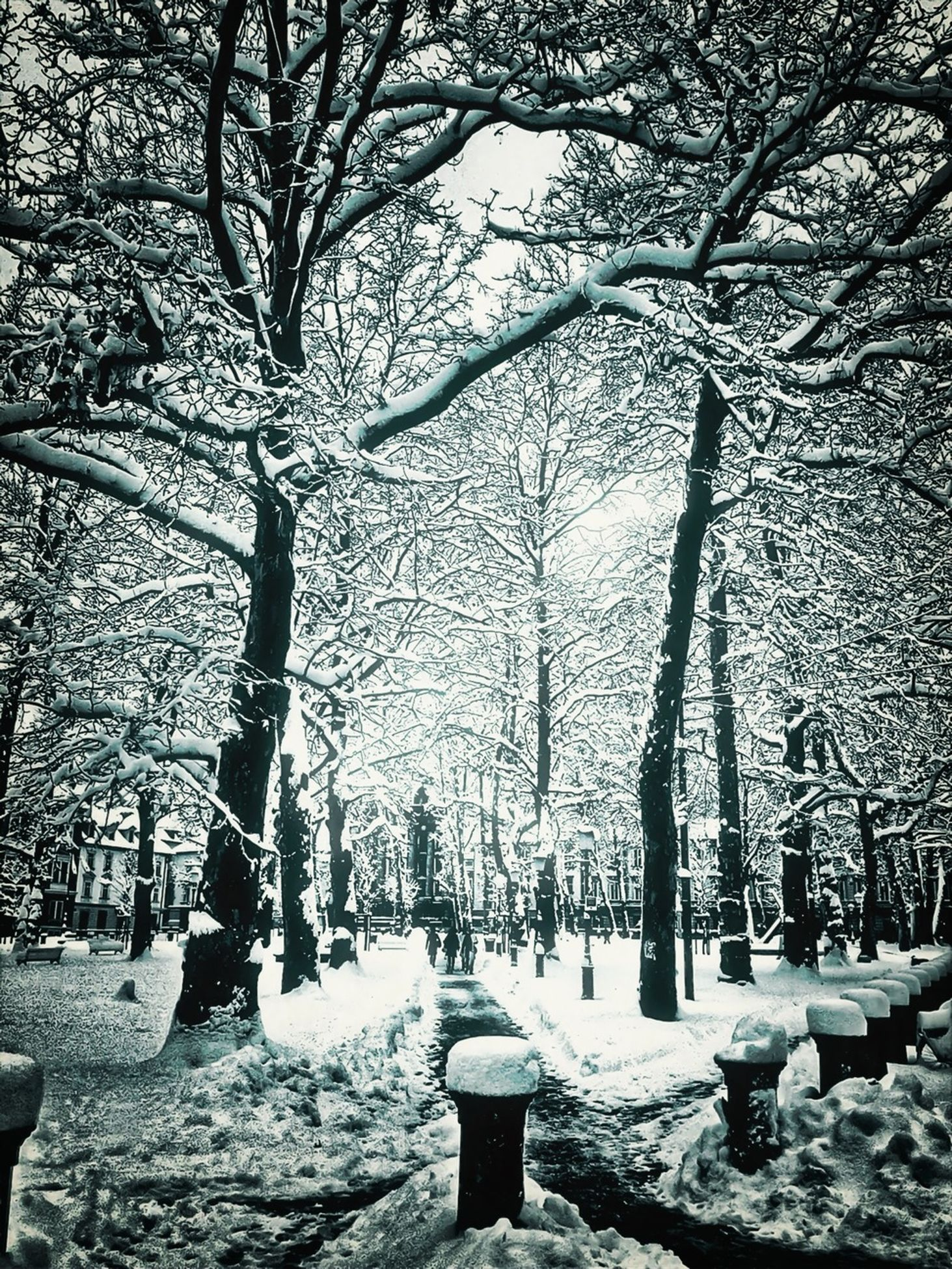 snow, winter, cold temperature, season, tree, weather, bare tree, covering, branch, tree trunk, nature, frozen, covered, tranquility, white color, bench, park - man made space, field, outdoors, day