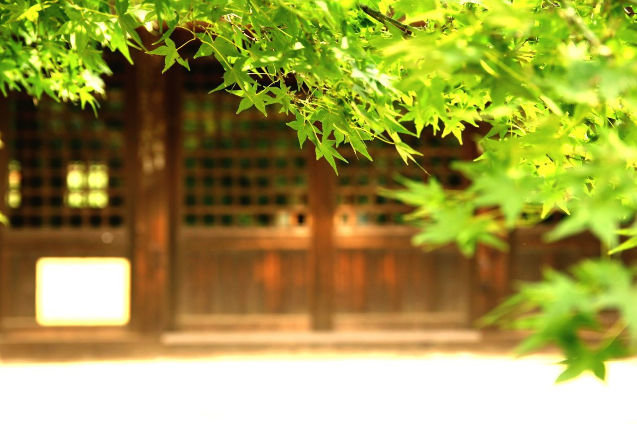 Japan Setagaya Gotokuji Shrine Architecture Building Green Leaf Plant Closed Day Close-up Nature Focus On Foreground Selective Focus Wooden Ultimate Japan