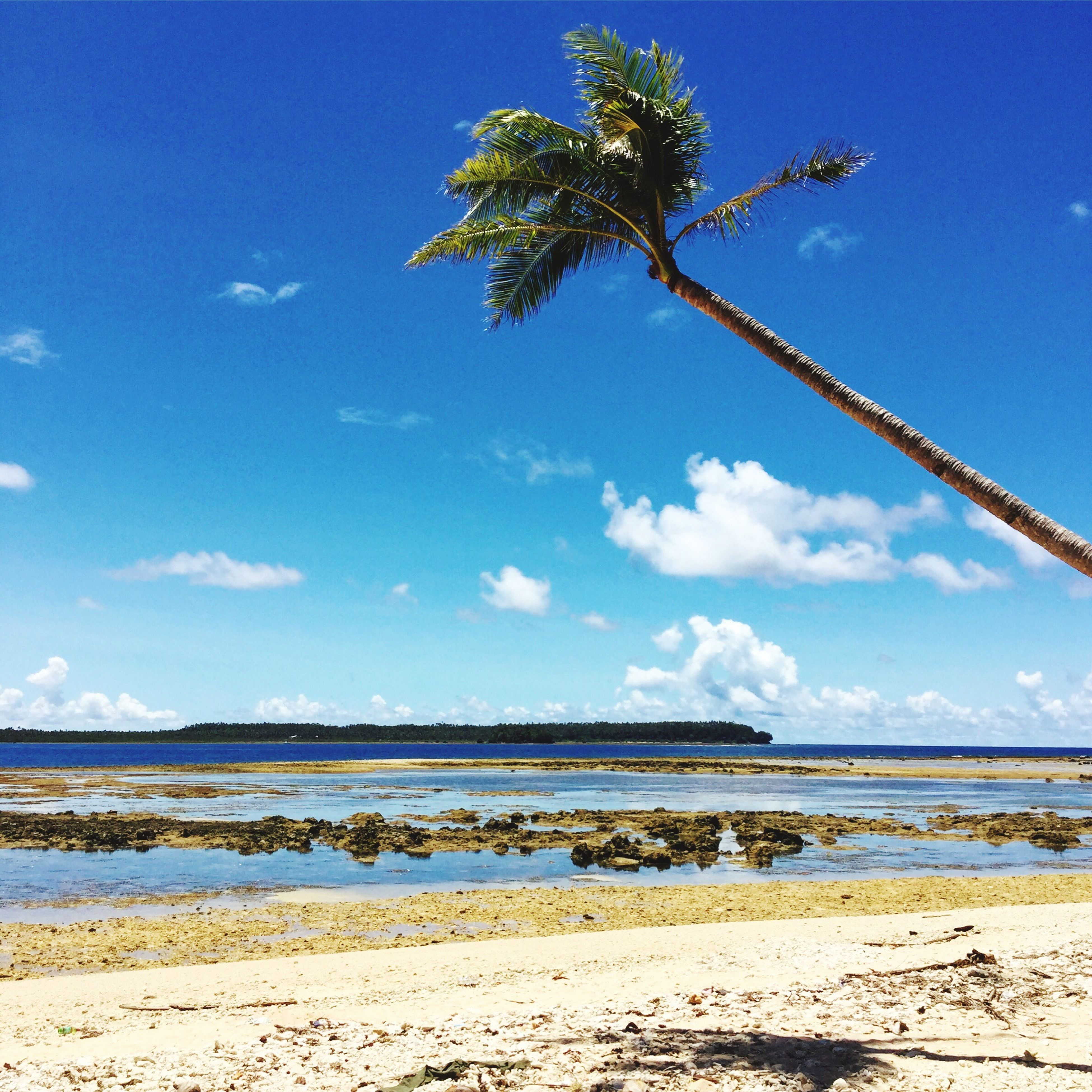 water, blue, tranquility, sky, beach, tranquil scene, sea, scenics, beauty in nature, nature, shore, sand, tree, palm tree, cloud, idyllic, horizon over water, day, growth, no people