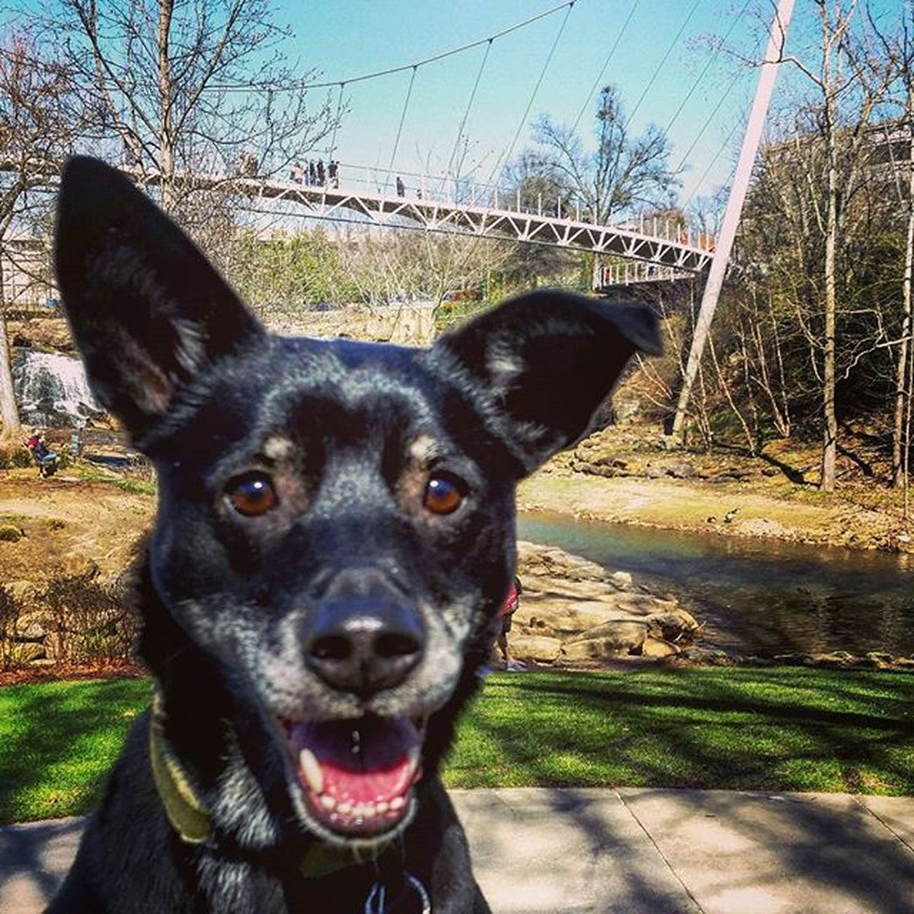 Beautiful day in Falls Park on the Reedy with Dilly! Yeahthatgreenville Dillybean Fallspark