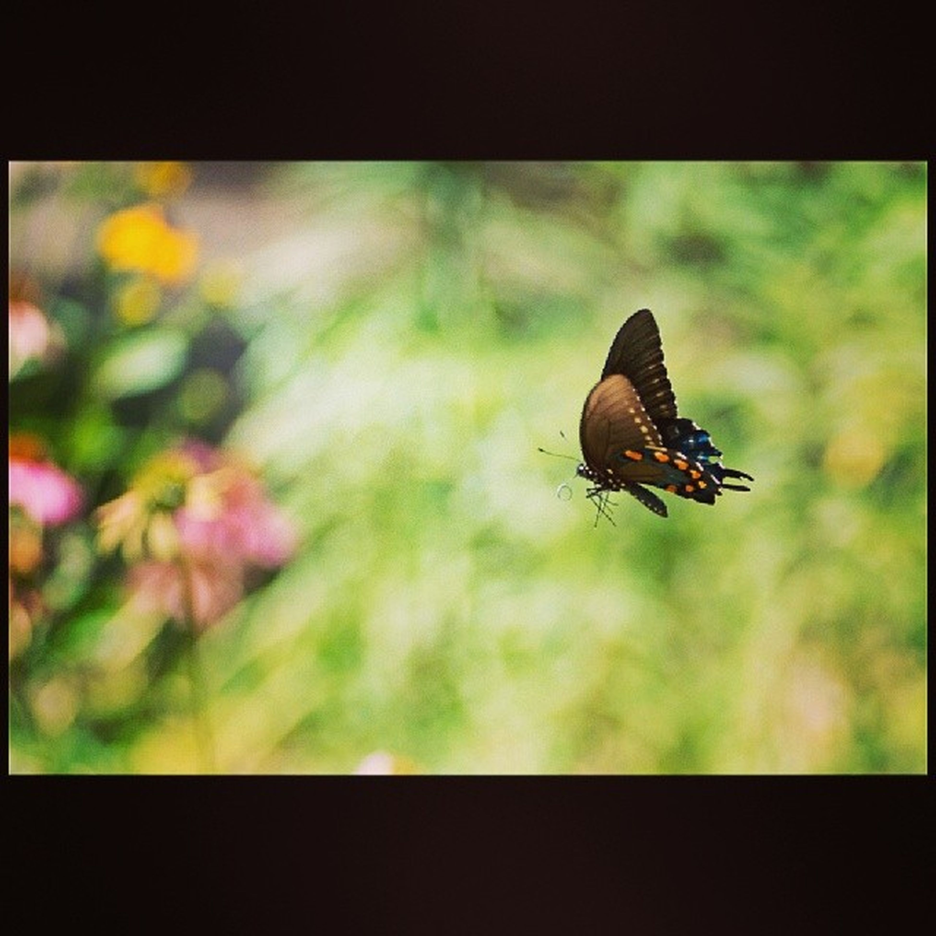 Lone little butterfly in motion.. Lonebutterfly Instamotion Butterflies Beautiful Bugs Naturephotography Instanature Instawesome TBT  Funtimes Science Warmweather Spring Time Timeforflowerstobloom Alittletooearlyforspring in YYC Wishfulthinking Snowstillmeltinginyyc