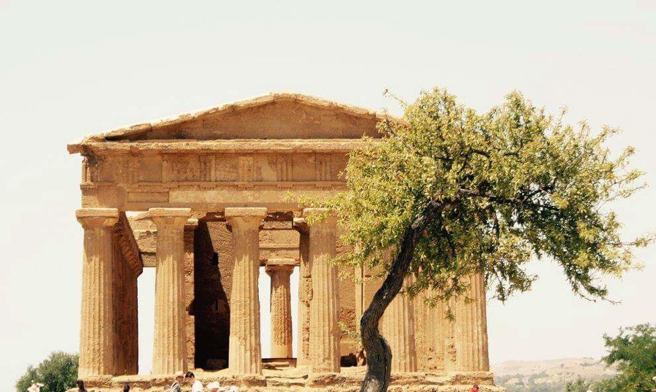 Ancient Olive Trees Sicily Agrigento Valle Dei Templi The Grea Architecture - 2017 Eyeem Awarss The Architect - 2017 EyeEm Awards
