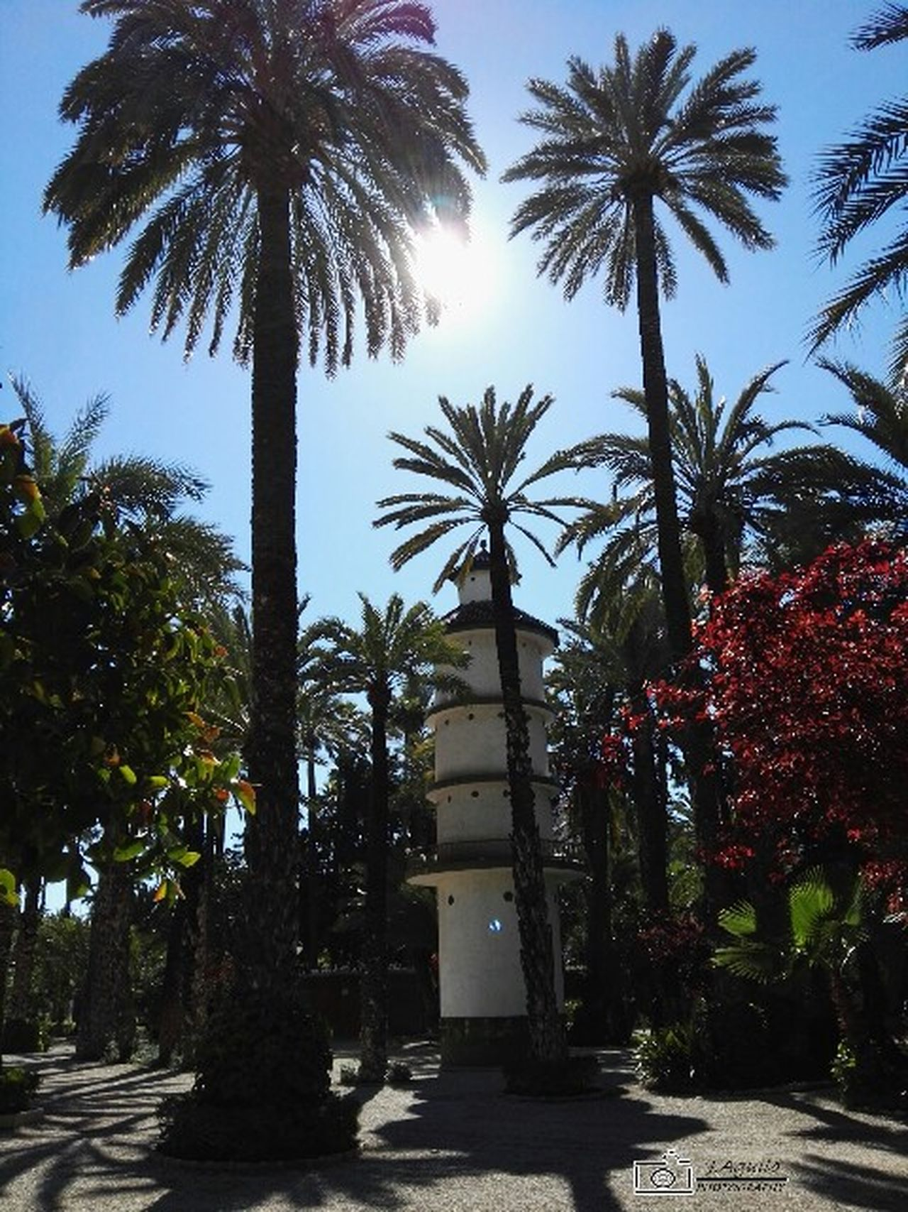 Tree Palm Tree Growth No People Nature Outdoors Sky Built Structure Building Exterior Green Color Day Beauty In Nature Architecture elche