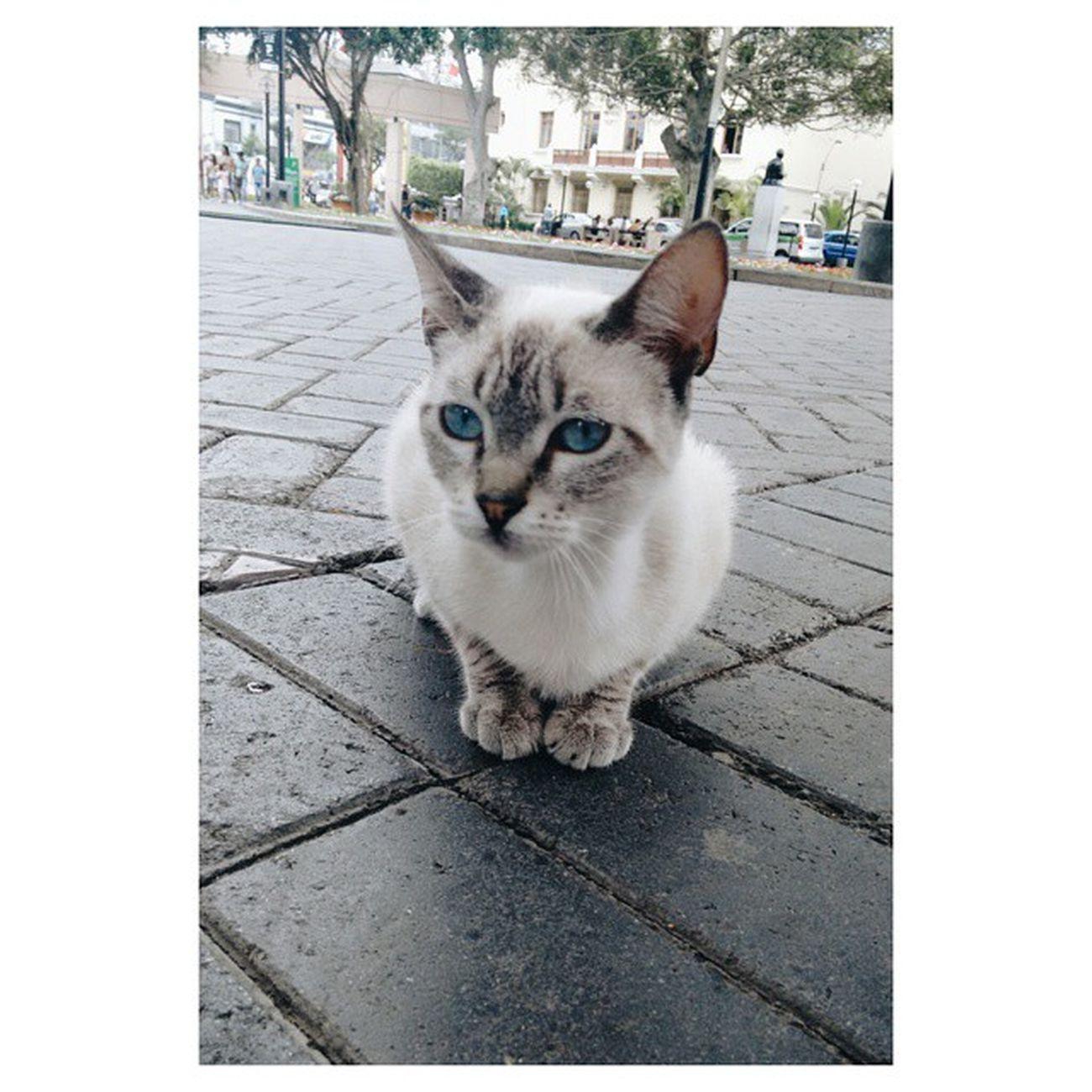 Michie Missyou Myfirstkitten Kittylover Kittylover Kitten Kitty Kittylove