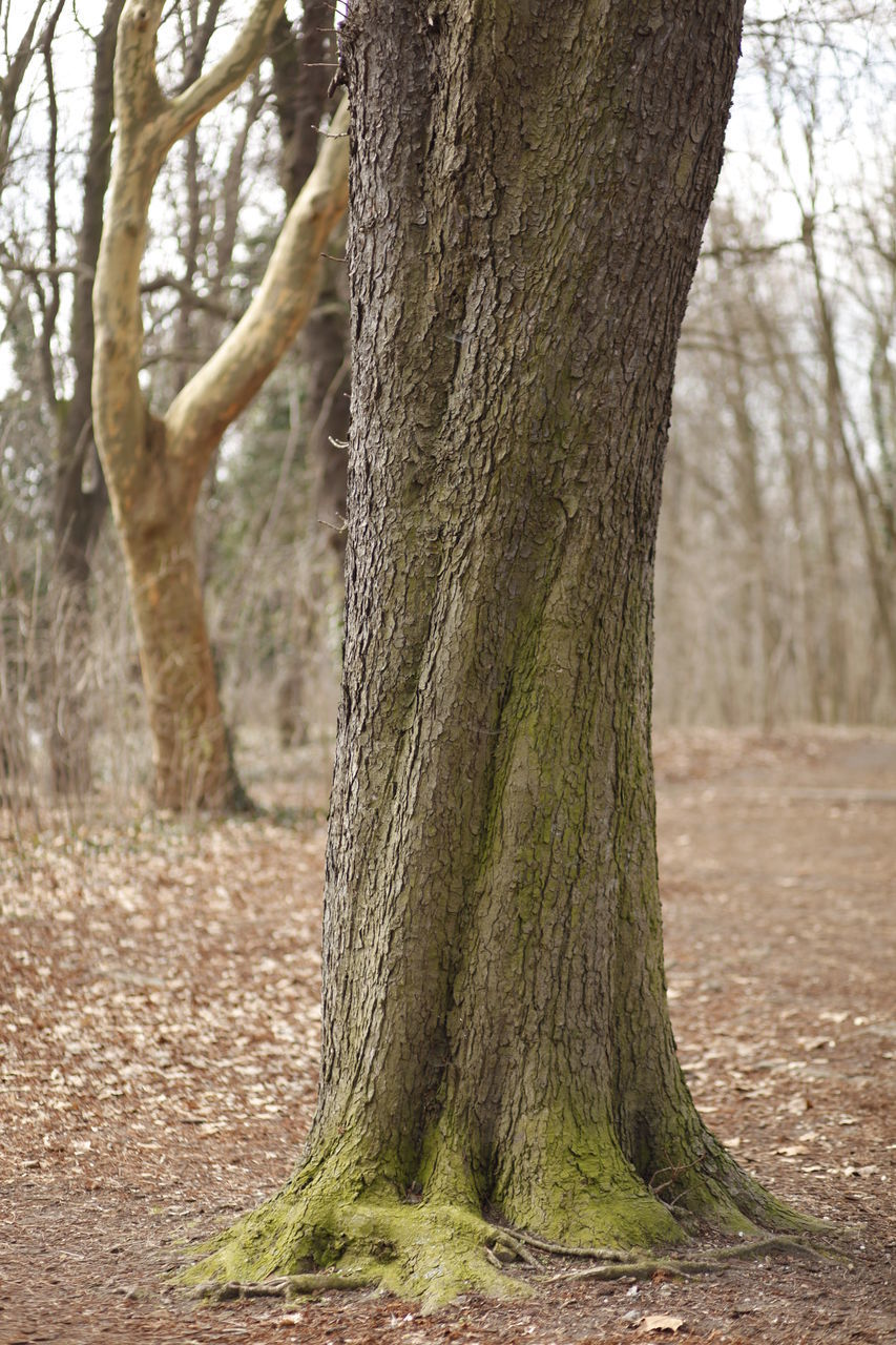 tree trunk, tree, nature, bare tree, tranquility, outdoors, day, no people, landscape, beauty in nature, scenics