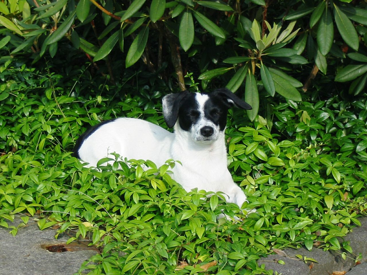 CLOSE-UP OF A DOG ON Leaves