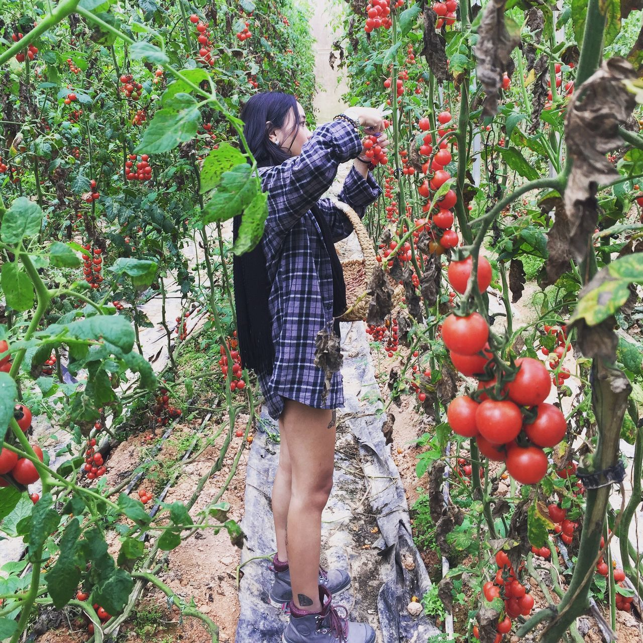 real people, growth, fruit, day, tree, plant, casual clothing, leisure activity, full length, lifestyles, outdoors, standing, food and drink, nature, women, food, childhood, freshness, healthy eating, men, young women, young adult, adult, people