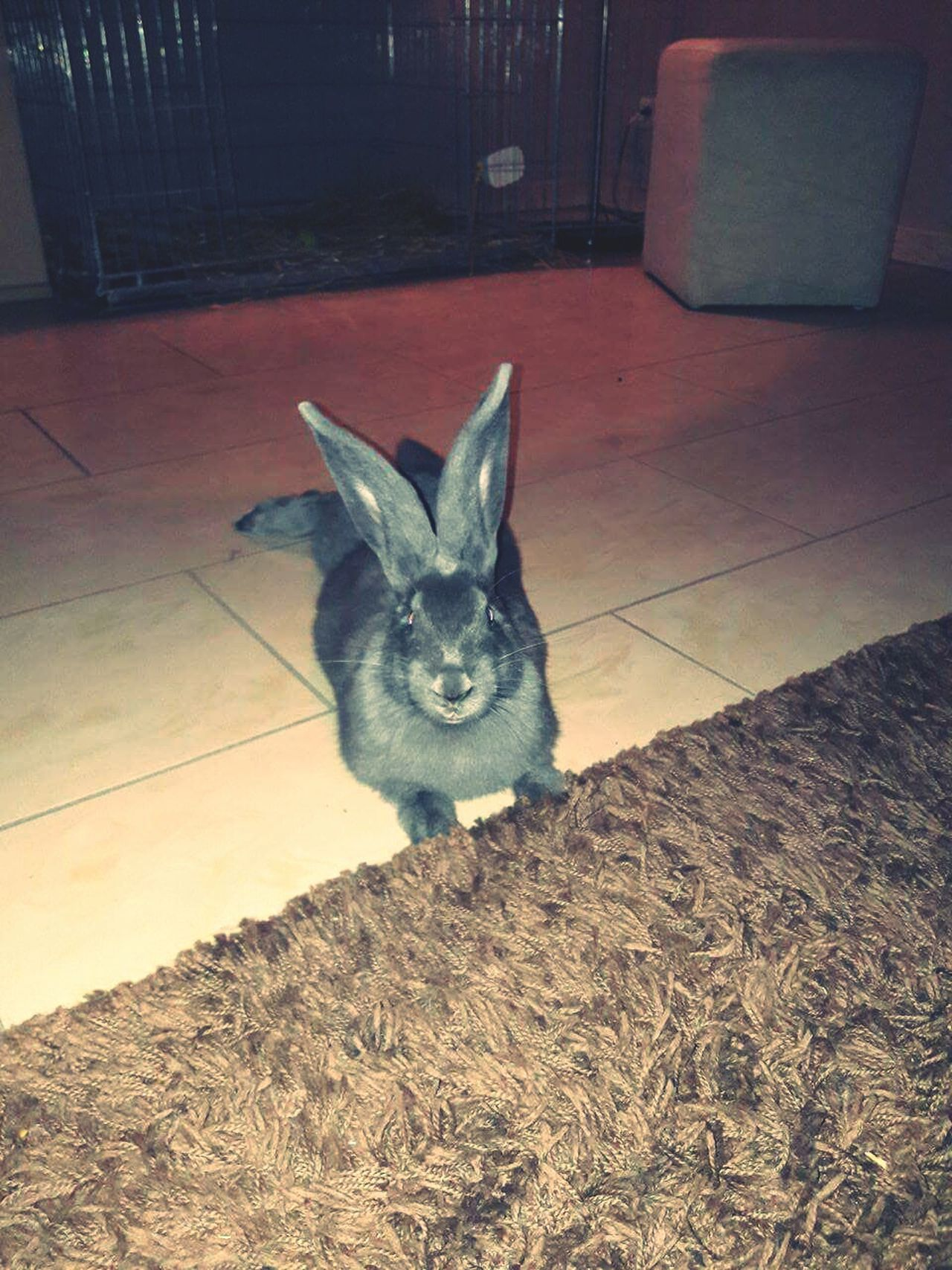 Mybunny Fie 4monthsold Photooftheday Photographer Frd