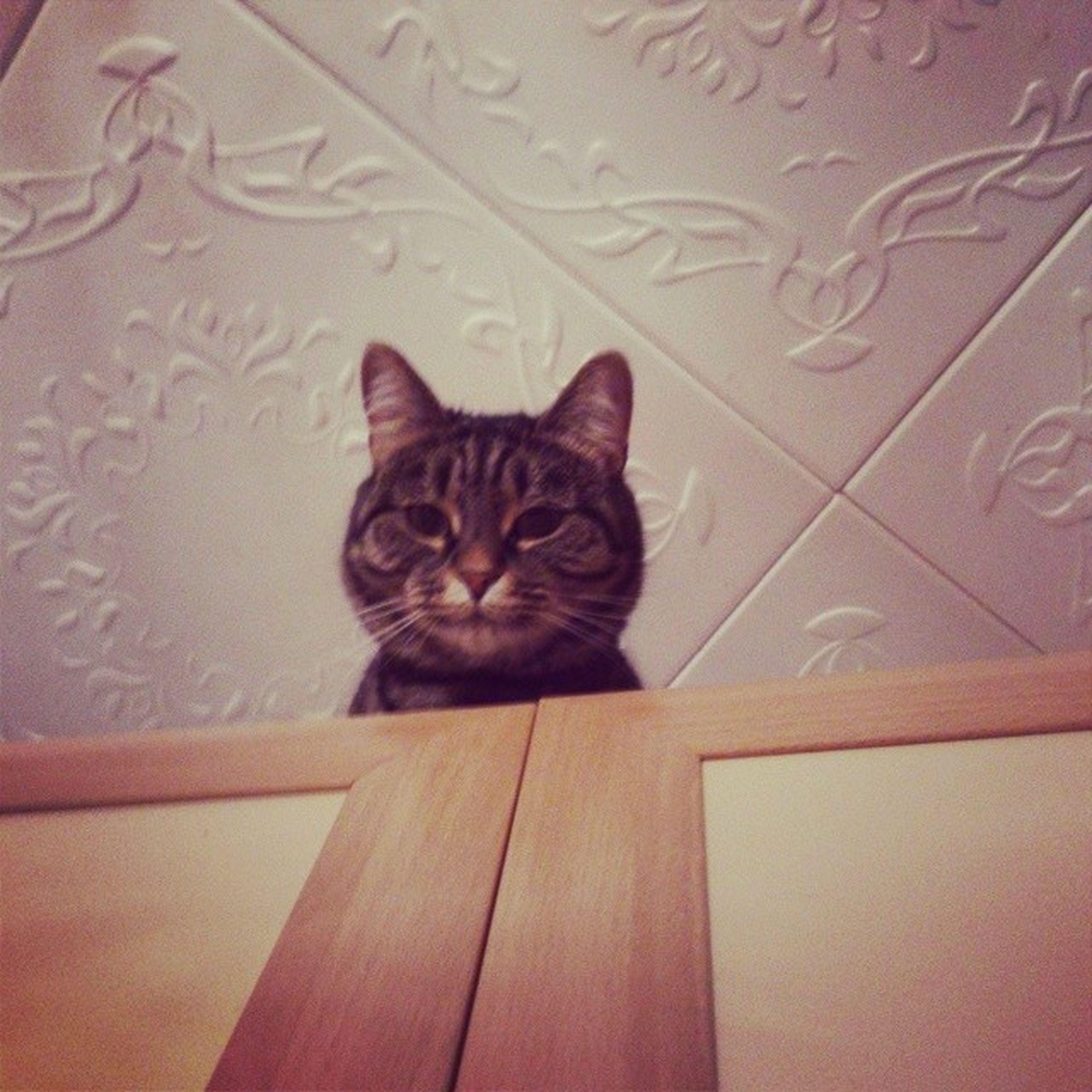 Большой брат следит за тобой любитнаблюдать царьщеки каролина котаны