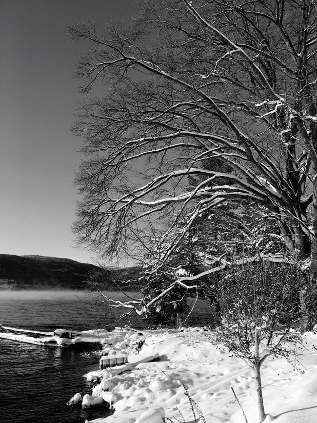 Norway Wather Winter Cold Eikeren Ice Snow Bluesky Tree IPhoneography Natur Natgeo Blackandwhite