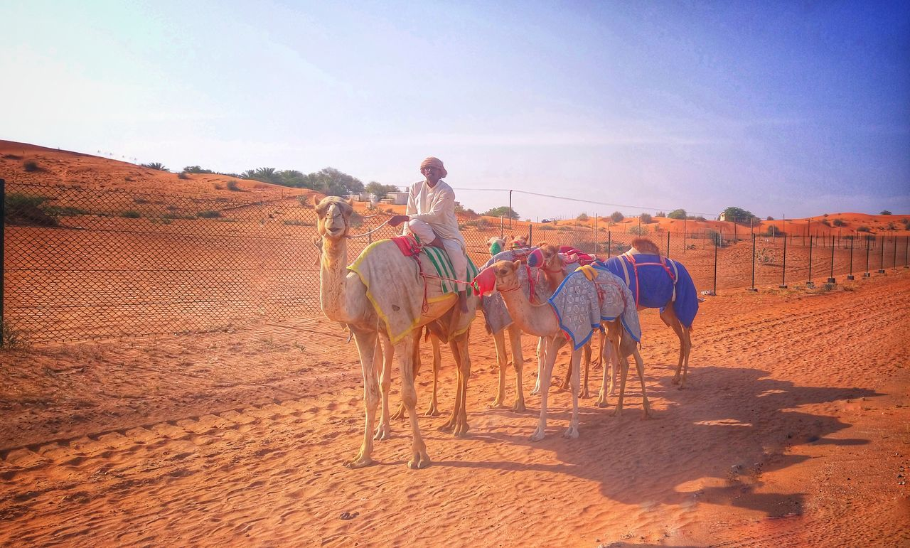 Sand Adult One Person People Adults Only Riding Working Front View Rural Scene Sky Agriculture One Animal Desert Outdoors Domestic Animals Sand Dune Day Young Adult Desrt Scenes Desertlife Travel Photography EyeEmBestPics Eyemphotography Travel Destinations Hard Life