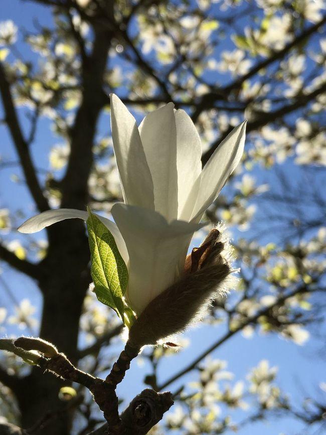 EyeEm Nature Lover EyeEm Best Shots Södermalm Flowers Eye4photography  EyeEm Best Edits Sofiakyrkan Nature On Your Doorstep
