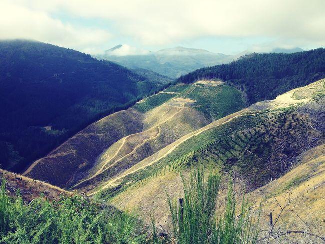 Mountainbike Mountain View Forest Hilltop Downhill NelsonsAdventures