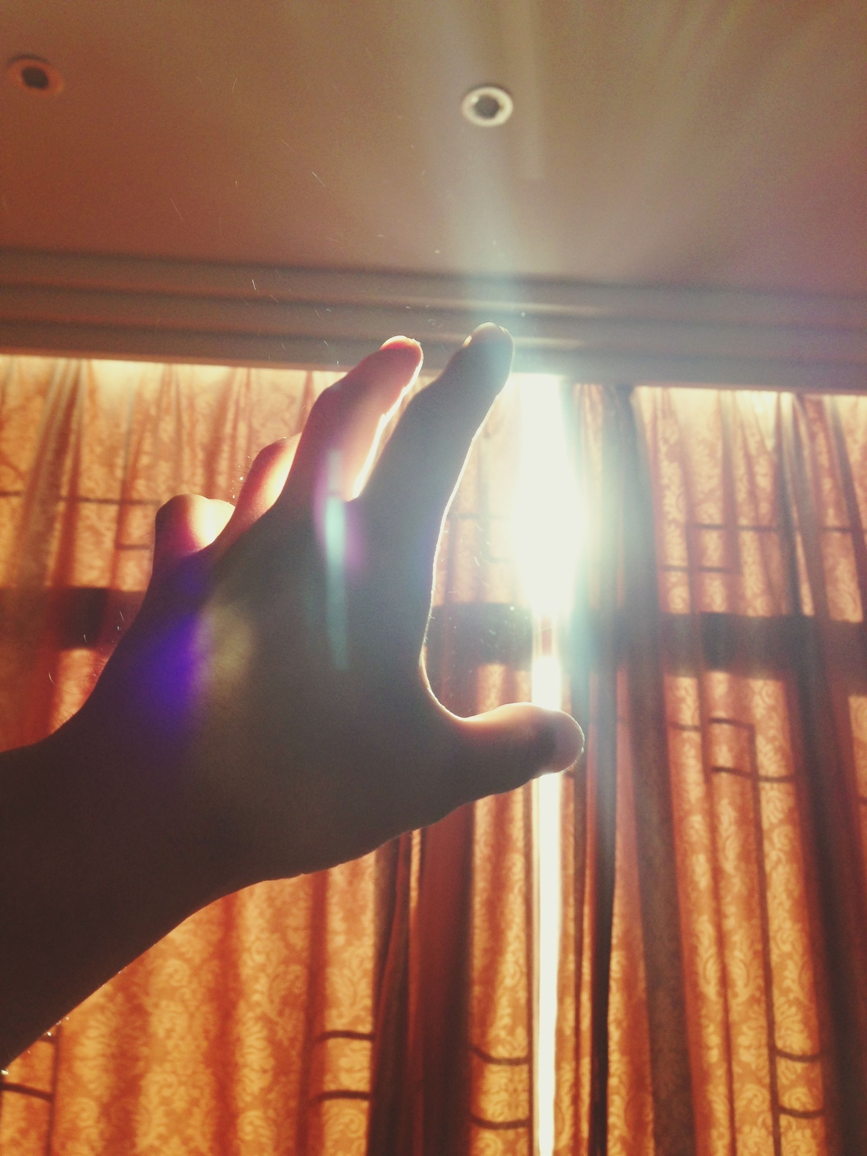indoors, person, sunlight, part of, lens flare, sunbeam, sun, low angle view, cropped, human finger, close-up, unrecognizable person, lifestyles, animal themes, one animal, shadow, personal perspective