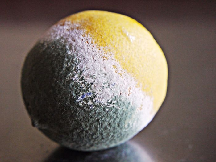 Citrus Fruit Close-up Day Disgusting  Focus On Foreground Green Indoors  Mold No People Tatty Yellow