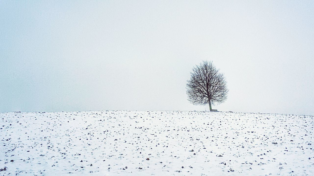 Tree in winter 2016 First Eyeem Photo