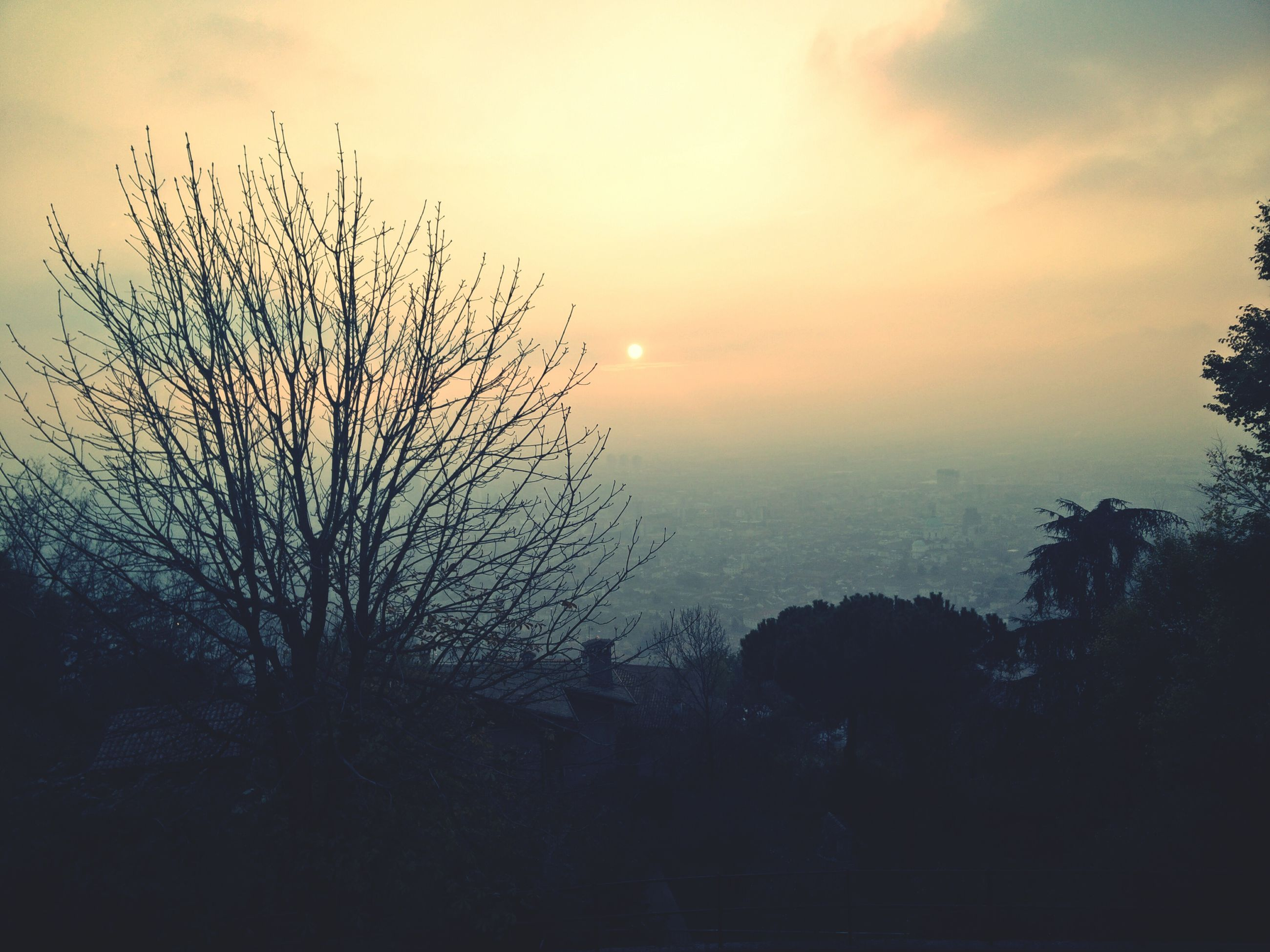 sunset, silhouette, sky, tranquility, tranquil scene, scenics, beauty in nature, tree, nature, sun, bare tree, cloud - sky, idyllic, growth, branch, landscape, plant, dusk, outdoors, no people