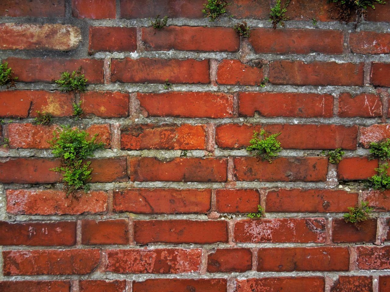 Bricks Brick Wall Bricks Wall Background Brick Wall With Flowers Backgrounds Background Background Texture Brickwall Brickporn Bricks Contrast Red And Green Ziegel Ziegelmauer Ziegelmauer Mit Pflanzen Hintergrund Hintergrundbilder Hintergrundbild Ziegelsteine Wallpaper Wall Art Walls Wallpapers Brickwork  Bricks In The Wall Wanderlust