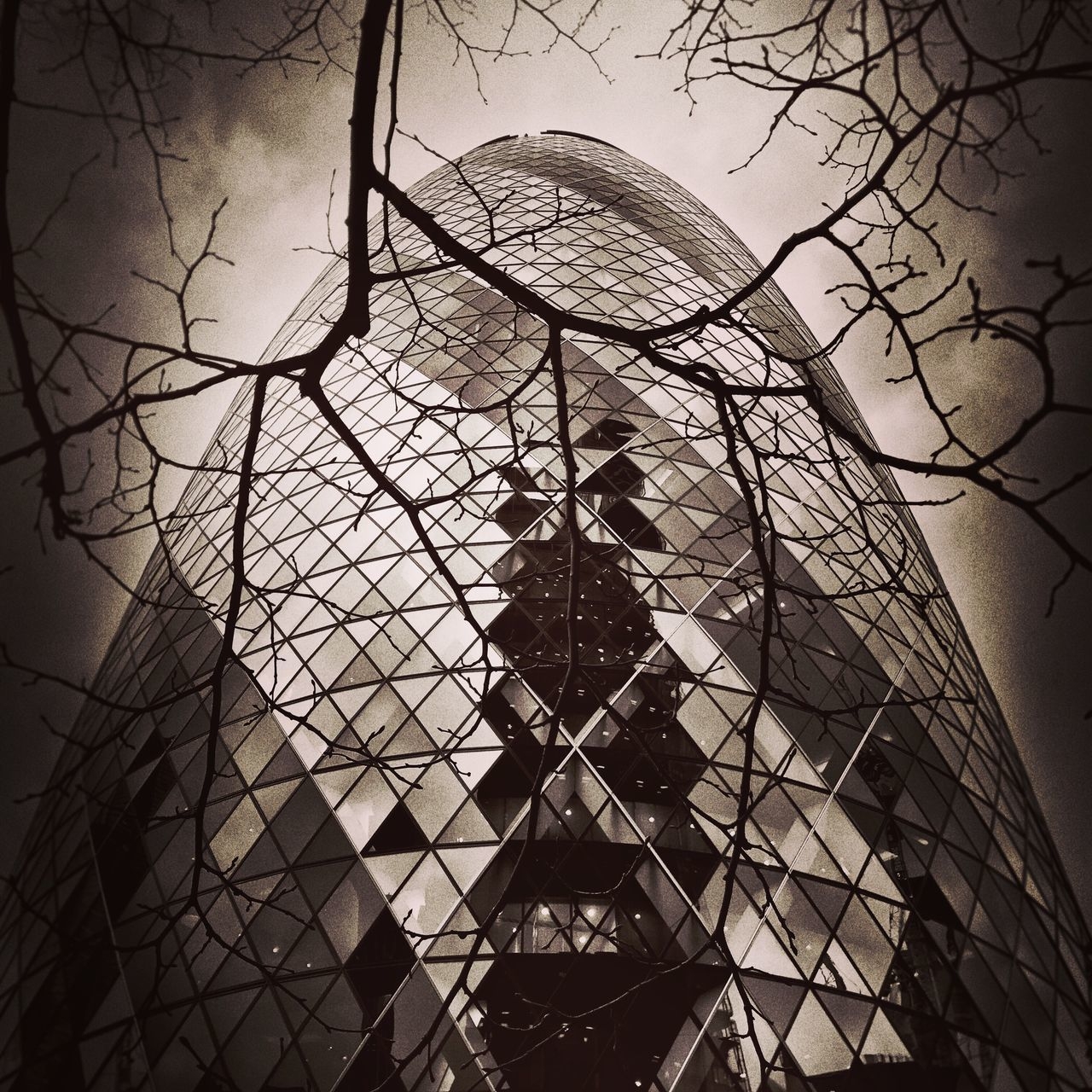 No People Bare Tree Outdoors Sky Tree Day Architecture Buildings Gherkin Gherkin Tower Gherkin Building London Spooky Halloween Blackandwhite Black & White Buildings & Sky