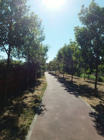 Street and Trees Tree Outdoors No People Sunlight Sky Day Nature Path Pathway Nature The Week On EyeEm EyeEmNewHere Milano Peschiera Borromeo Sommergefühle Sun Investing In Quality Of Life