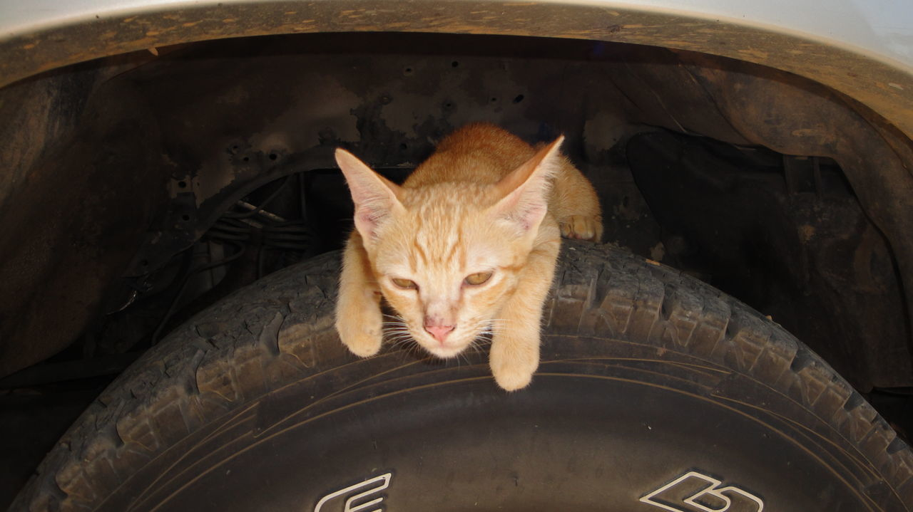 Cat Car Tyre Cat Eyes Cat Lovers Cat On Car Roof Cat People Cat Pet Cat Sleeping Outside Photography