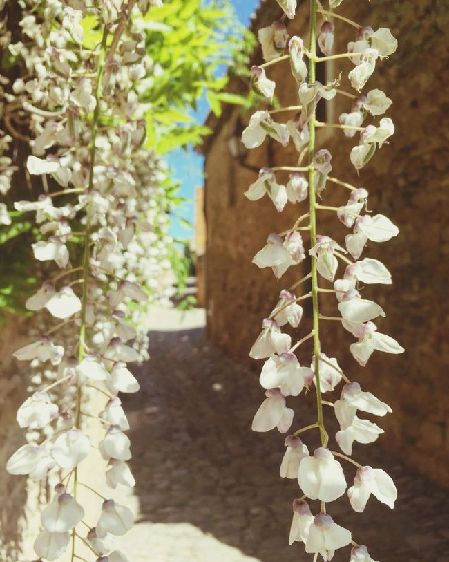 Micropobles Village Village Life Village View Plant Nature Fragility Flower Beauty In Nature