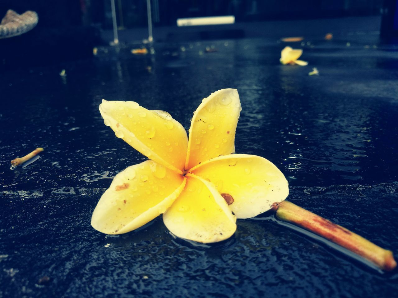 Frangipani Collection Frangipani In The Rain Yellow And Blue My Kind Of Art Personal Perspective Holiday Trip Bali, Indonesia Good Old Times Melancholia Love ♥ HuaweiP9