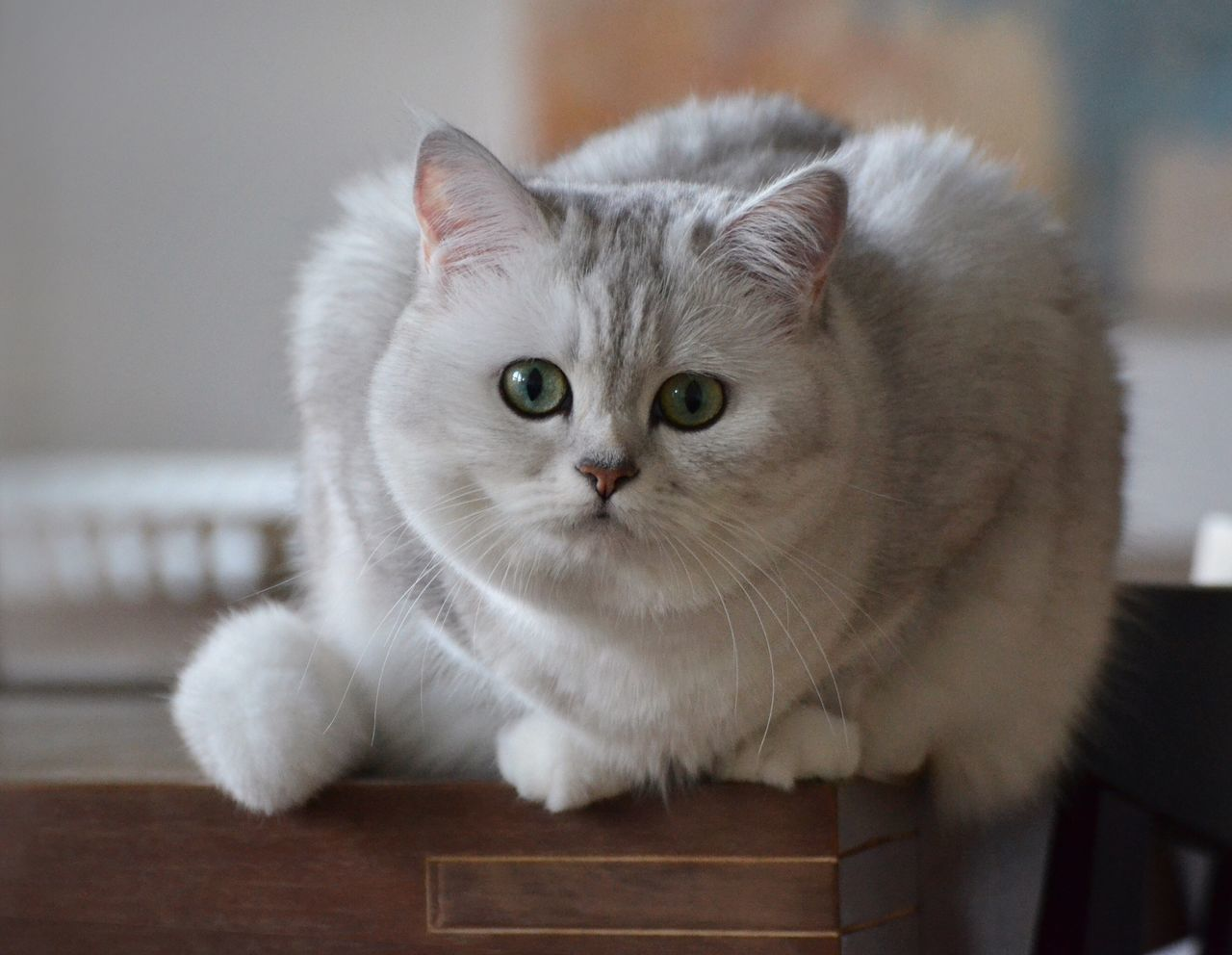 Catlady Feline Follow Green Eyes Beauty Cat Cats Carlovers Cats Of EyeEm Lovely Friend Home Photography Animals Pets