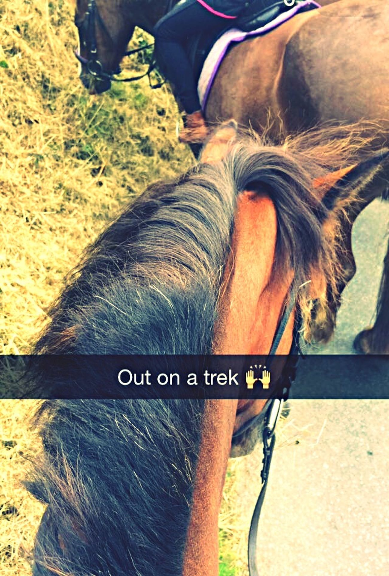 Out on a trek 🙌🏼👌🏽🏇🏿 That's Me Hanging Out Relaxing Taking Photos Enjoying Life
