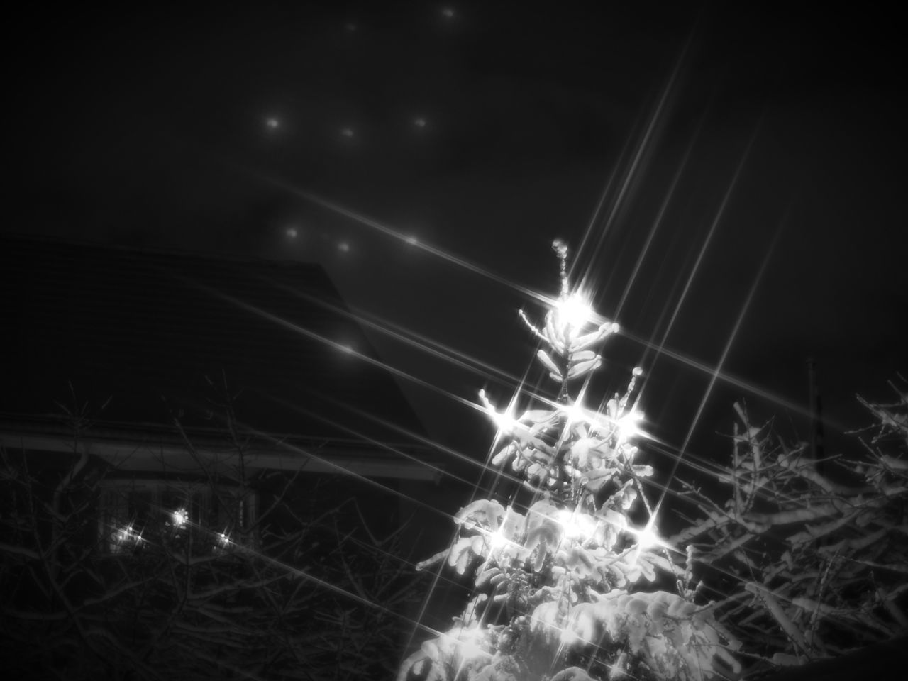 Longing for Christmas Illuminated Night No People Sparks Outdoors Tree Nature Star Filter Christmas Tree Christmas Lights Monochrome Black & White Black And White Blackandwhite