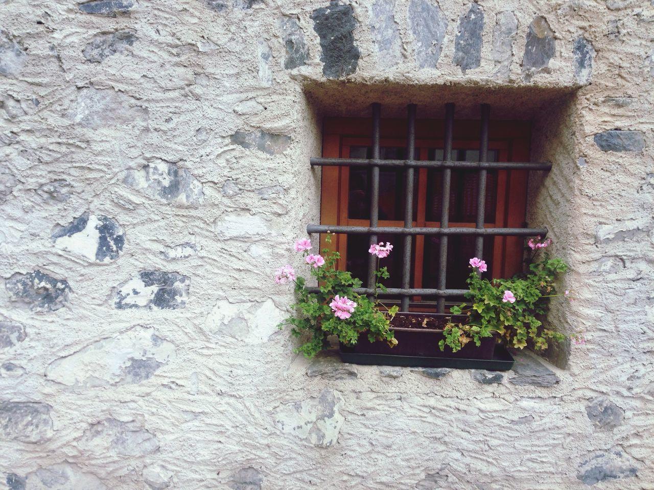 Window Flowers Rosé Rose - Flower Wall Wall Art