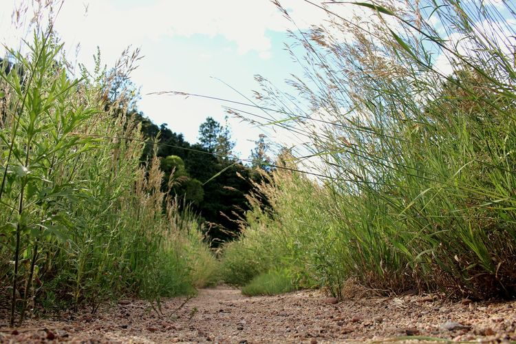Beautiful Summer Grass Dirt Overgrown Path Blue Green Worms Eye Colorado Hiking Exploring Forest Small