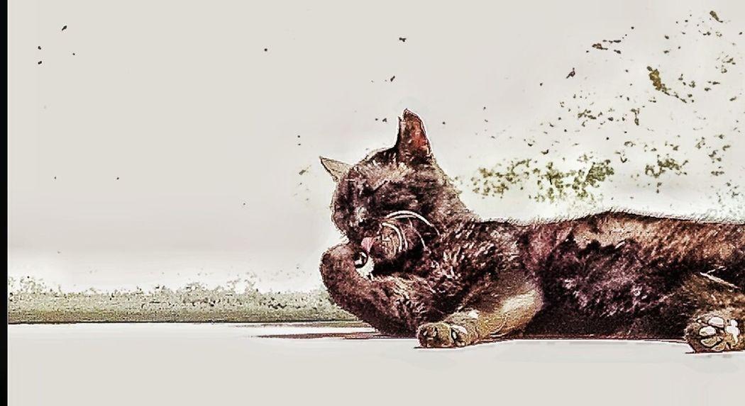 ElMushu Cat Gato