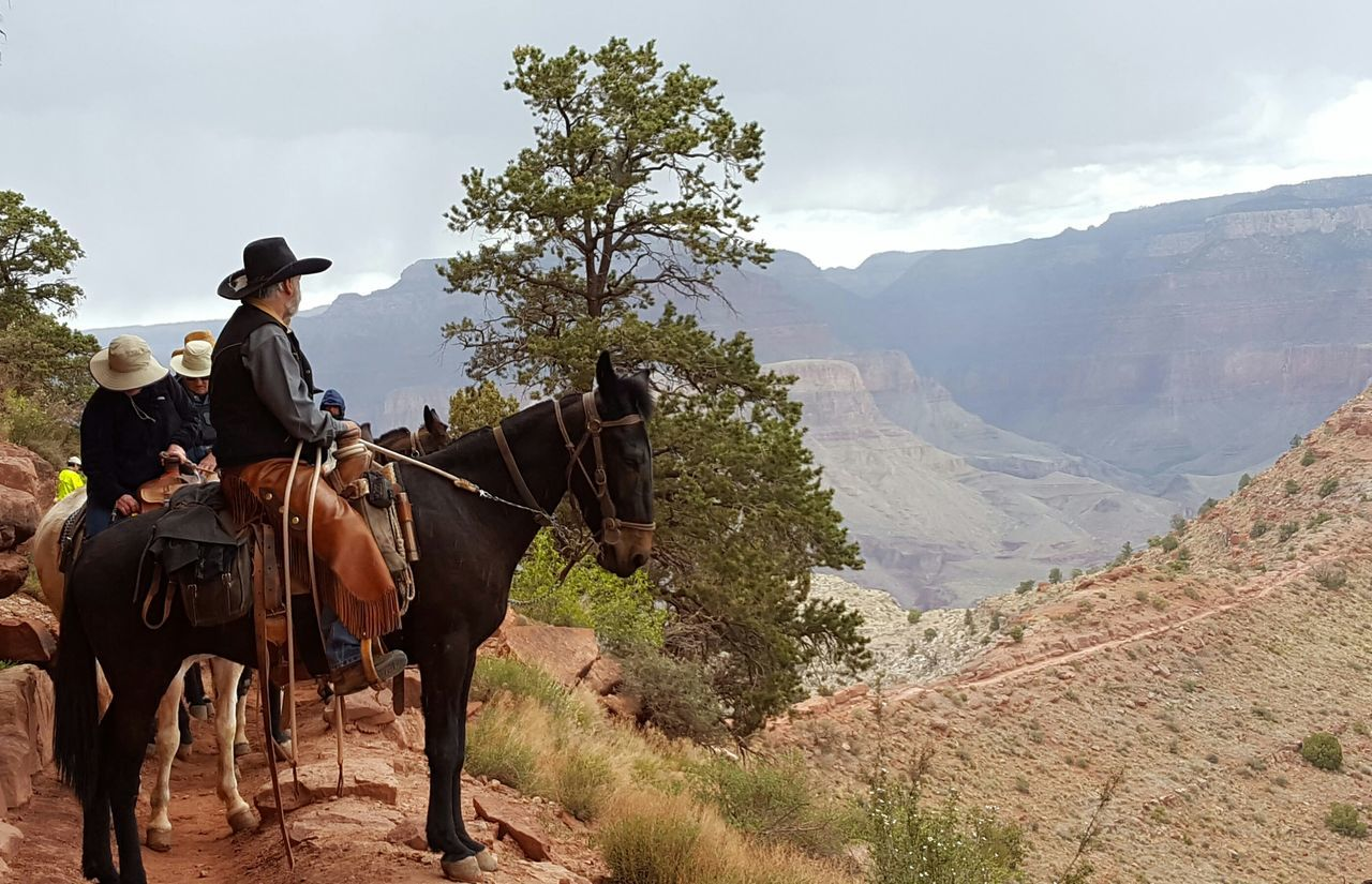 Beautiful stock photos of cowboy, Adventure, Animal Themes, Beauty In Nature, Bridle
