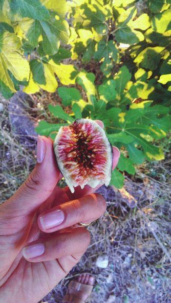 Figs Eat More Fruit Fruits SPAIN Healthy Food