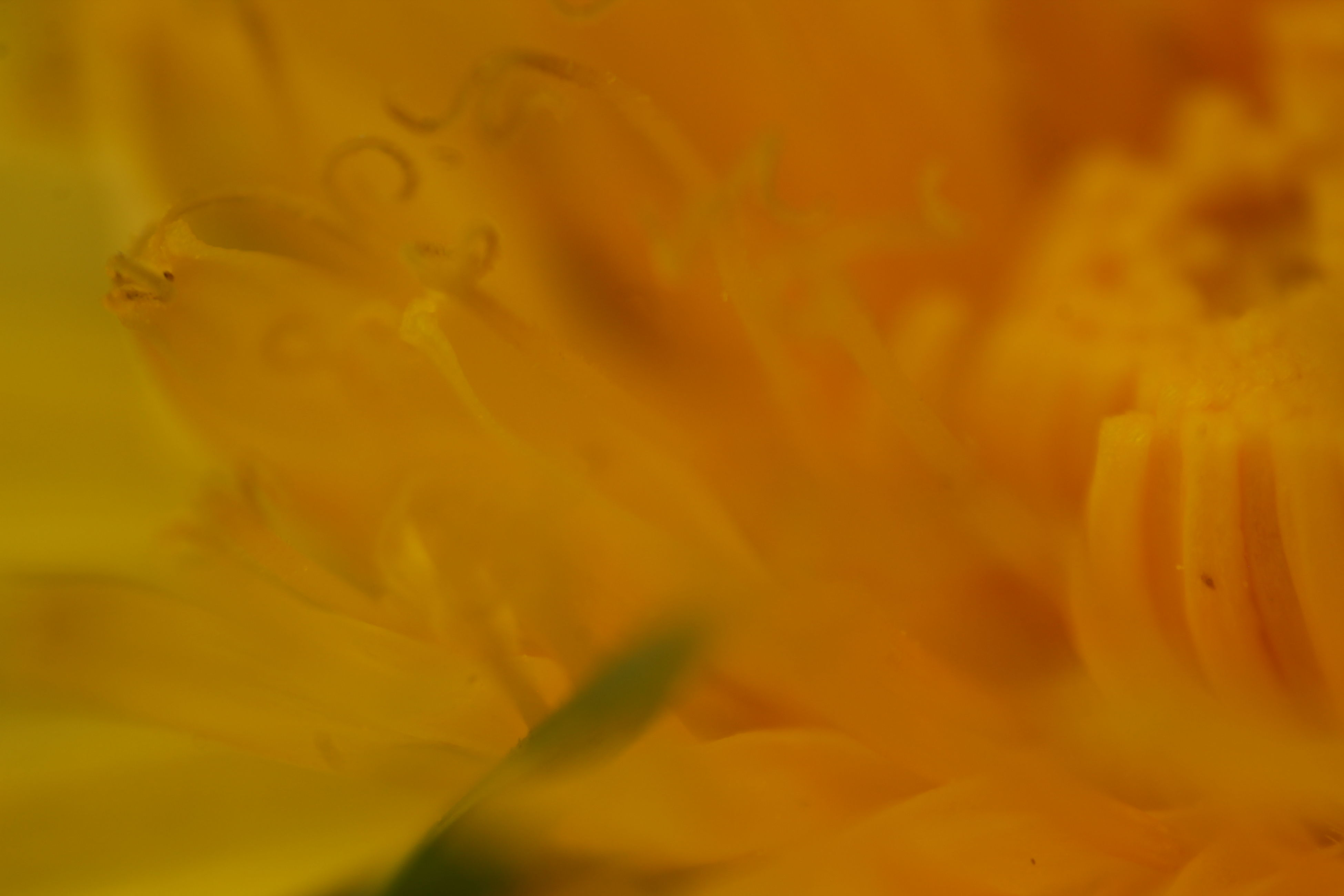 flower, petal, yellow, freshness, fragility, flower head, close-up, beauty in nature, full frame, growth, nature, selective focus, single flower, backgrounds, extreme close-up, plant, macro, blooming, orange color, pollen