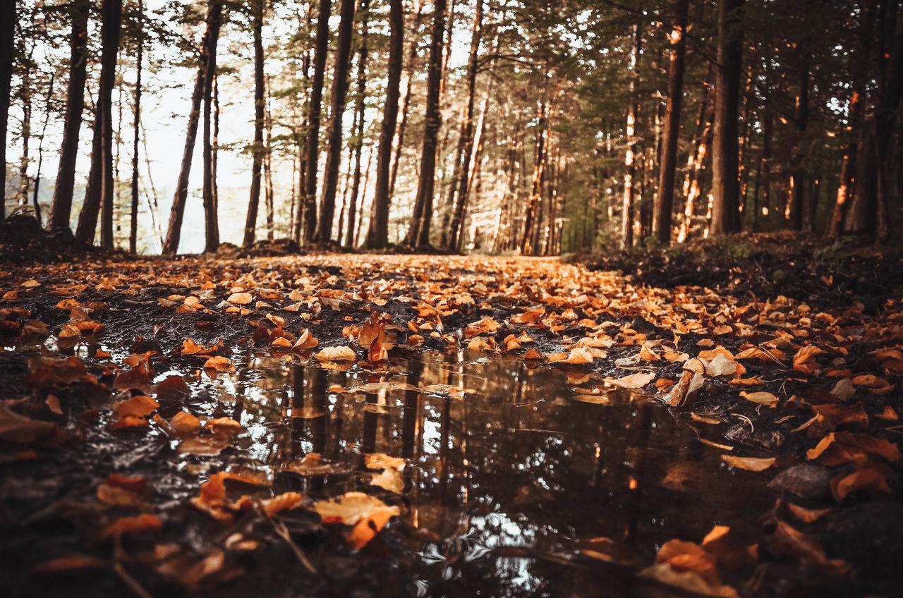 Autumn Autumn Colors Autumn Leaves EyeEm Nature Lover EyeEm Selects Nice Day Poland The Week On EyeEm Autumn Autumn🍁🍁🍁 Beauty In Nature Day Forest Kaszuby Kaszuby Eyeem Leaf Nature No People Outdoors Poland Eyeem Scenics Tree Water Waterfront Way