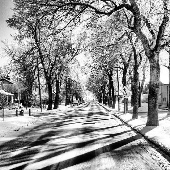 Just your normal residential street! Shadows Sunshining Snow